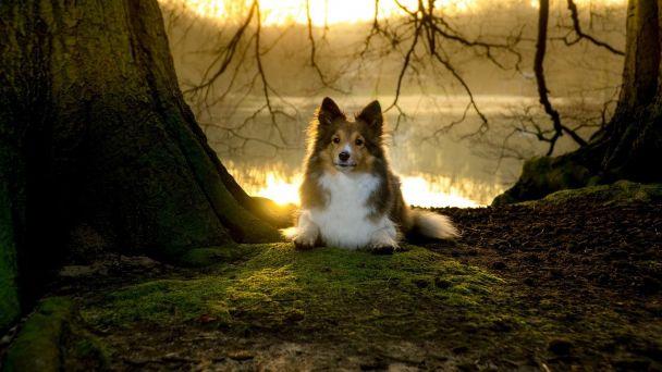 Oznámenie pre chovateľov psov